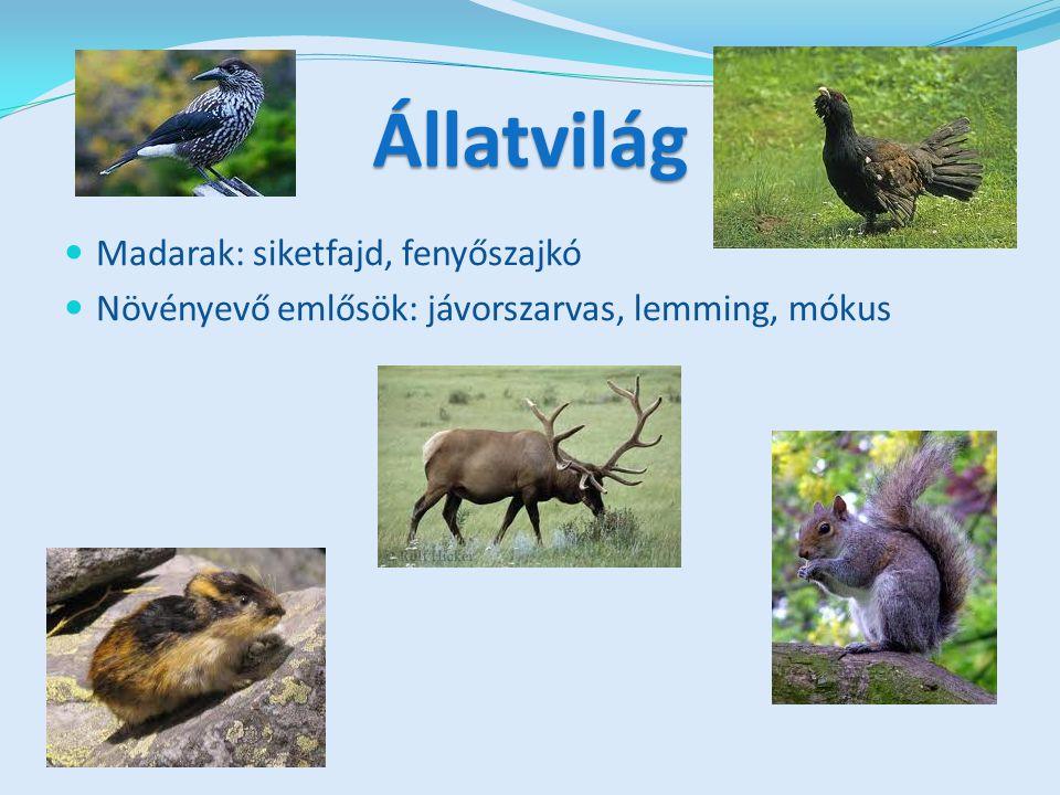Állatvilág Madarak: siketfajd, fenyőszajkó Növényevő emlősök: jávorszarvas, lemming, mókus