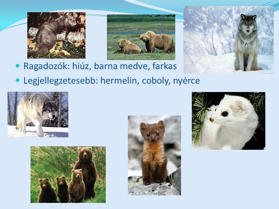 Ragadozók: hiúz, barna medve, farkas Legjellegzetesebb: hermelin, coboly, nyérce