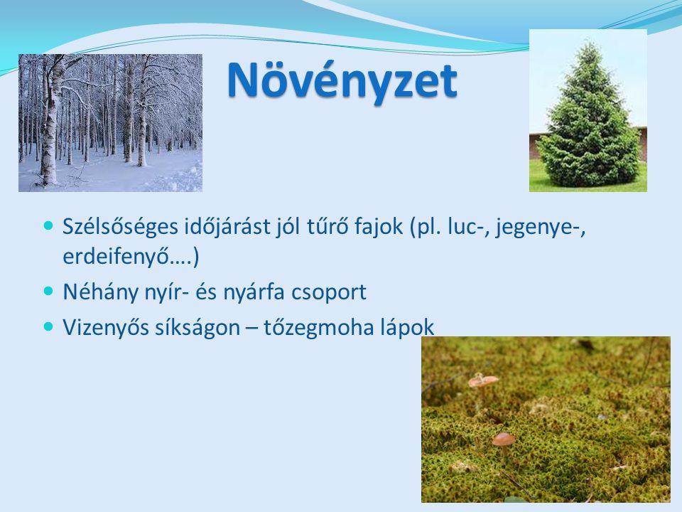 Legértékesebb fa: szibériai erdei fenyő (olaj dús toboza miatt) Cserjeszint uralkodó növényei: áfonya, málna, sokféle ehető gomba Mohaszint vastagsága néha fél méter is lehet