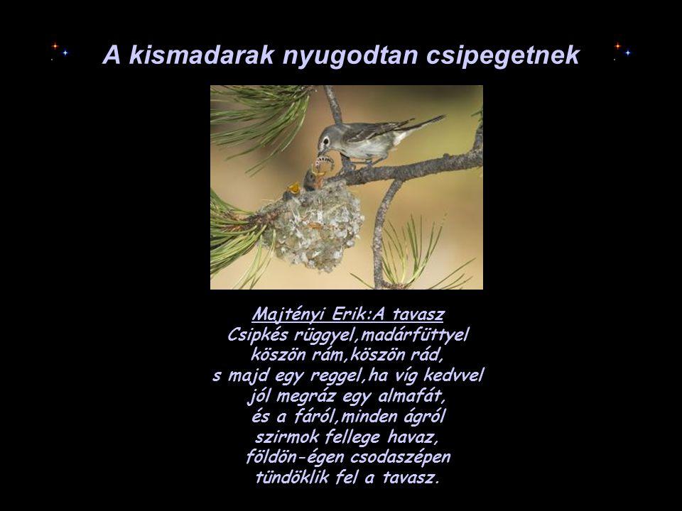A kismadarak nyugodtan csipegetnek Majtényi Erik:A tavasz Csipkés rüggyel,madárfüttyel köszön rám,köszön rád, s majd egy reggel,ha víg kedvvel jól meg