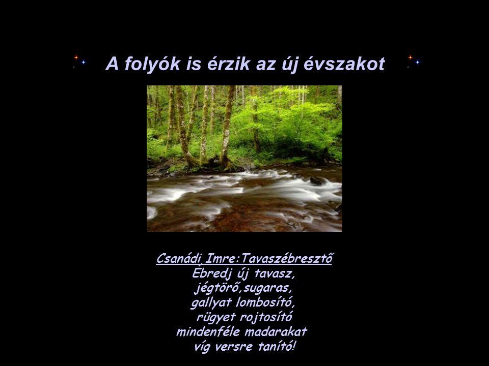 A folyók is érzik az új évszakot Csanádi Imre:Tavaszébresztő Ébredj új tavasz, jégtörő,sugaras, gallyat lombosító, rügyet rojtosító mindenféle madarak