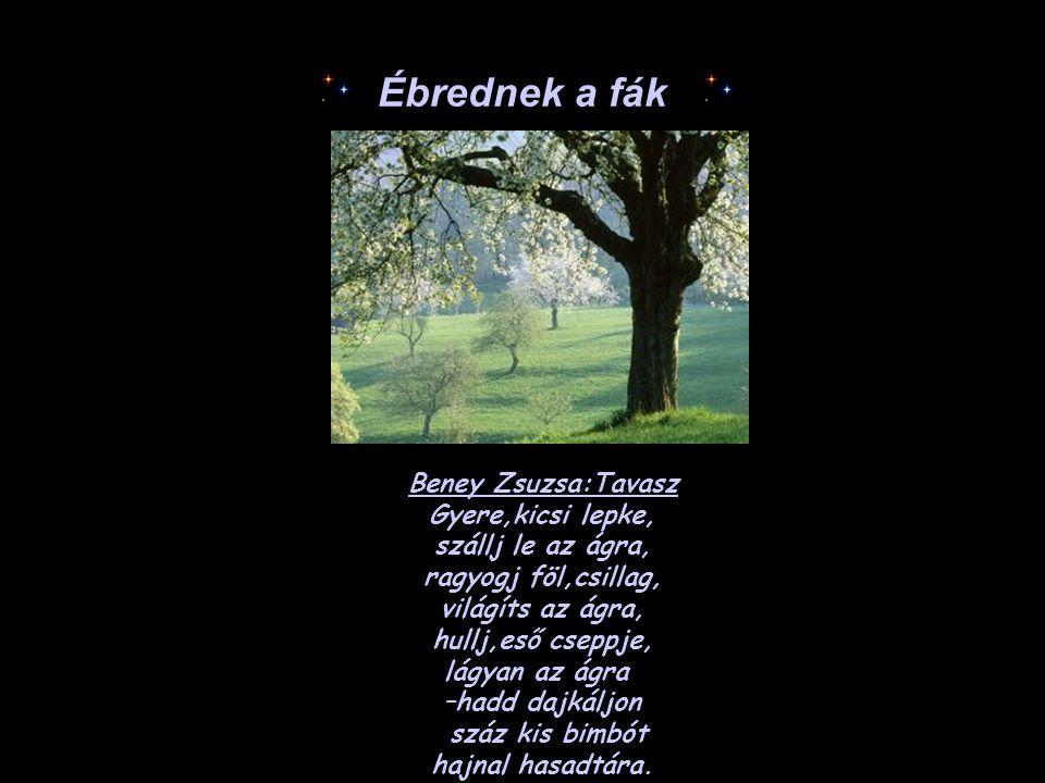 Ébrednek a fák Beney Zsuzsa:Tavasz Gyere,kicsi lepke, szállj le az ágra, ragyogj föl,csillag, világíts az ágra, hullj,eső cseppje, lágyan az ágra –had