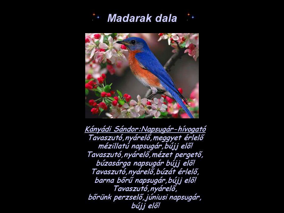 Madarak dala Kányádi Sándor:Napsugár-hívogató Tavaszutó,nyárelő,meggyet érlelő mézillatú napsugár,bújj elő! Tavaszutó,nyárelő,mézet pergető, búzasárga