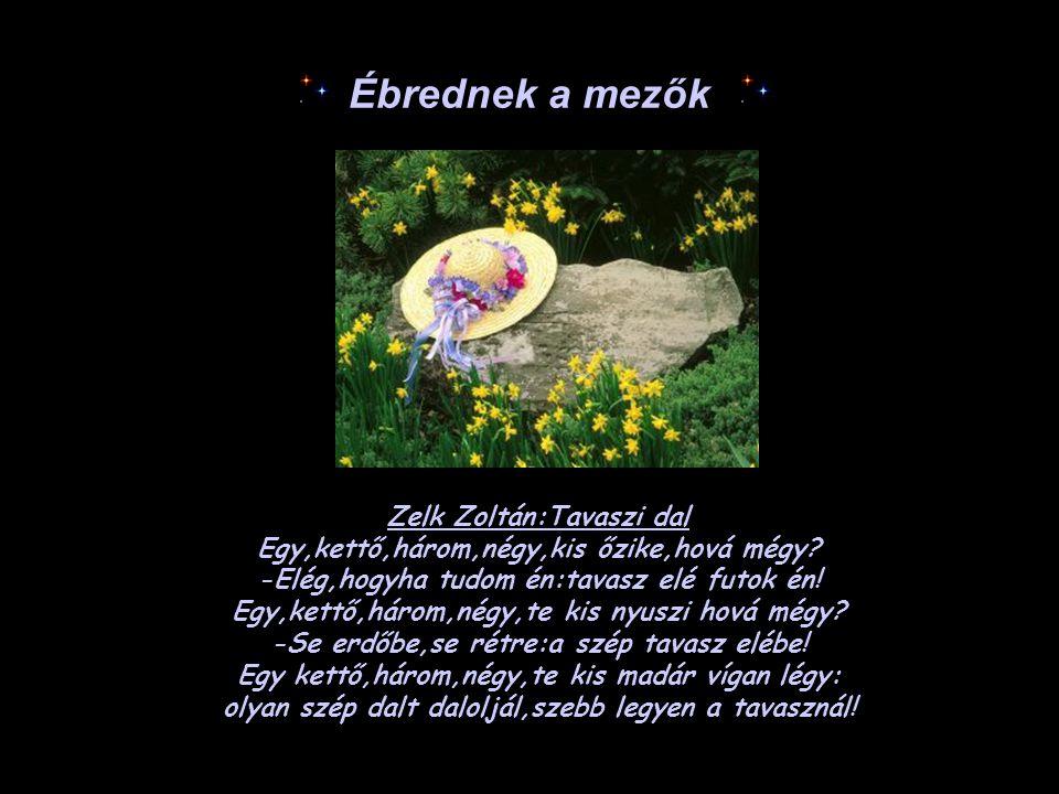 Ébrednek a mezők Zelk Zoltán:Tavaszi dal Egy,kettő,három,négy,kis őzike,hová mégy? -Elég,hogyha tudom én:tavasz elé futok én! Egy,kettő,három,négy,te