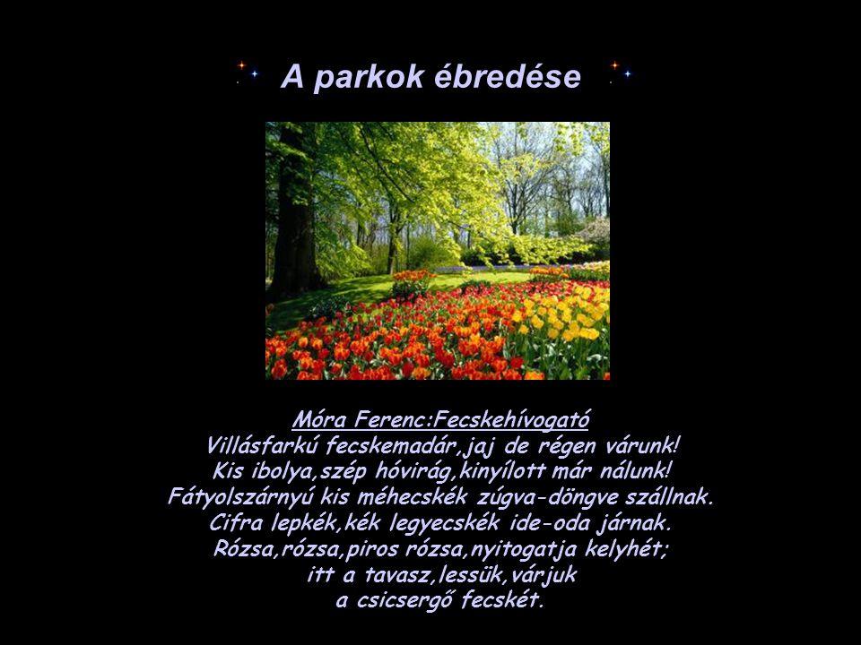 A parkok ébredése Móra Ferenc:Fecskehívogató Villásfarkú fecskemadár,jaj de régen várunk! Kis ibolya,szép hóvirág,kinyílott már nálunk! Fátyolszárnyú