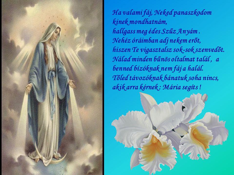 Rózsafüzér Királynője légy a világ megmentője, ajálj minket Szent Fiadnak Szeplőtelen Szűzanyánk.
