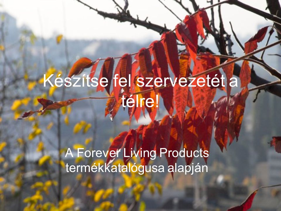 Készítse fel szervezetét a télre! A Forever Living Products termékkatalógusa alapján