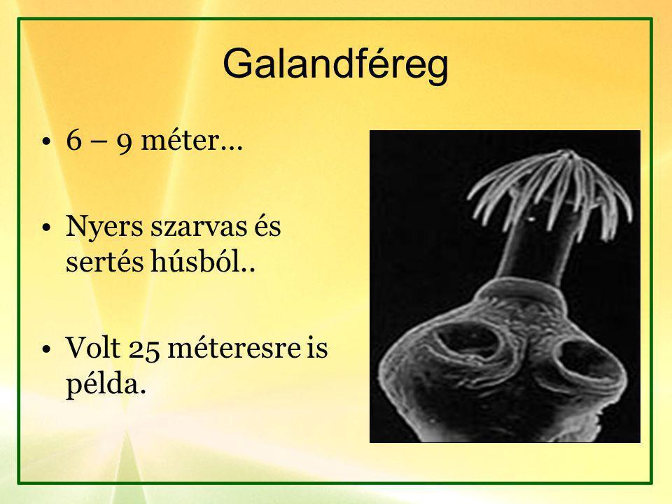 Galandféreg 6 – 9 méter… Nyers szarvas és sertés húsból.. Volt 25 méteresre is példa.