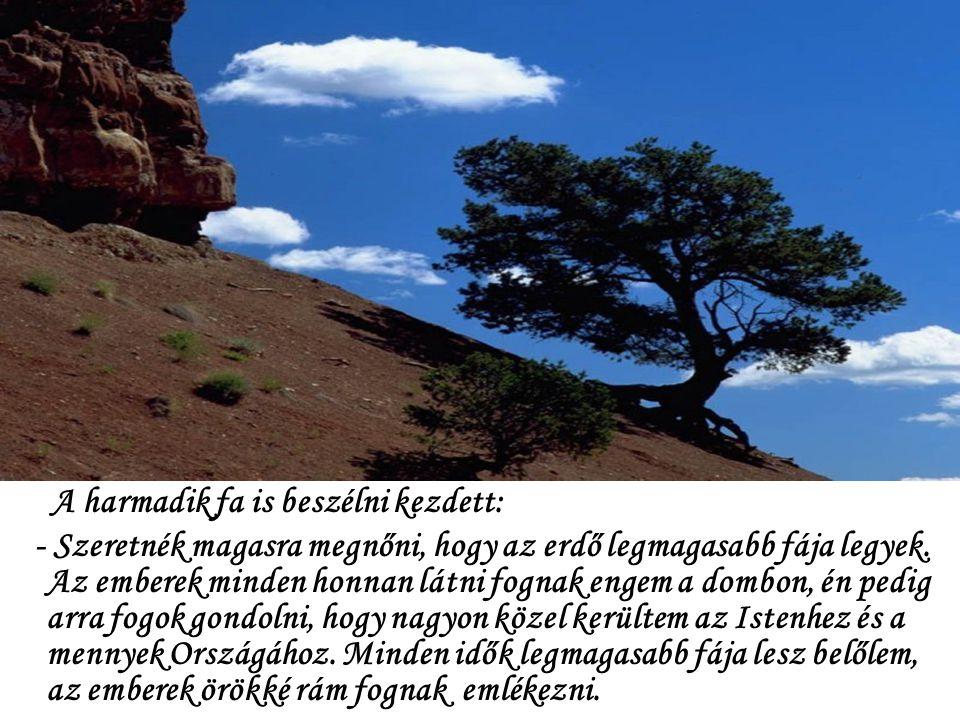 A harmadik fa is beszélni kezdett: - Szeretnék magasra megnőni, hogy az erdő legmagasabb fája legyek.