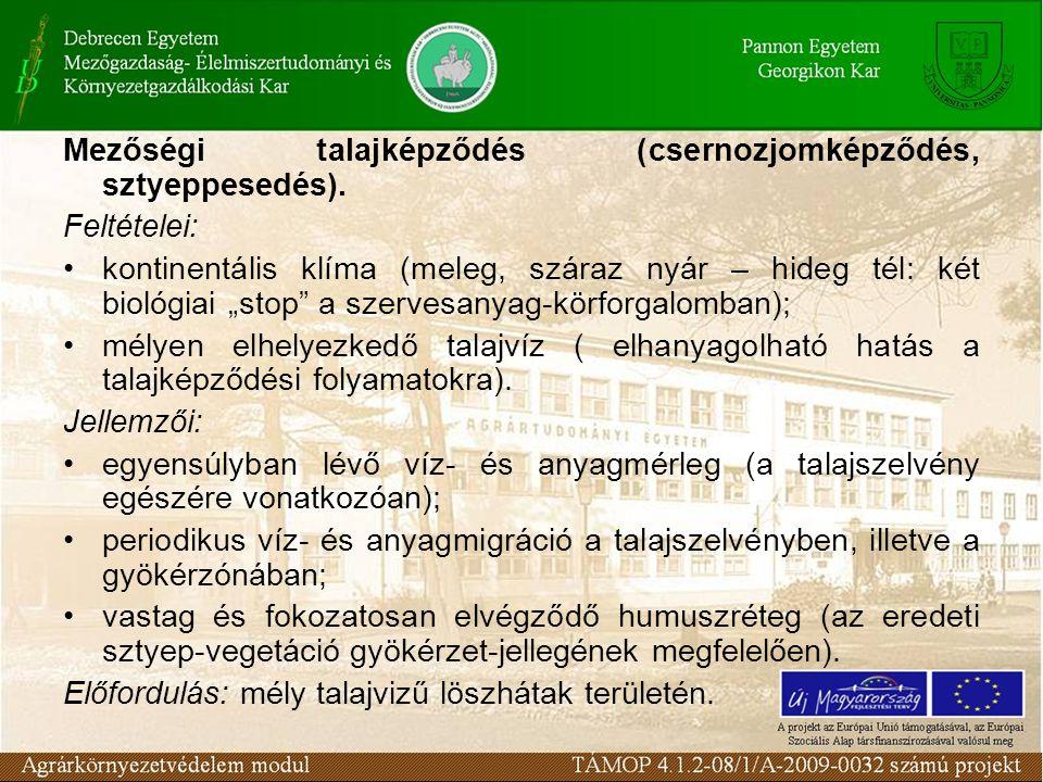 Mezőségi talajképződés (csernozjomképződés, sztyeppesedés).