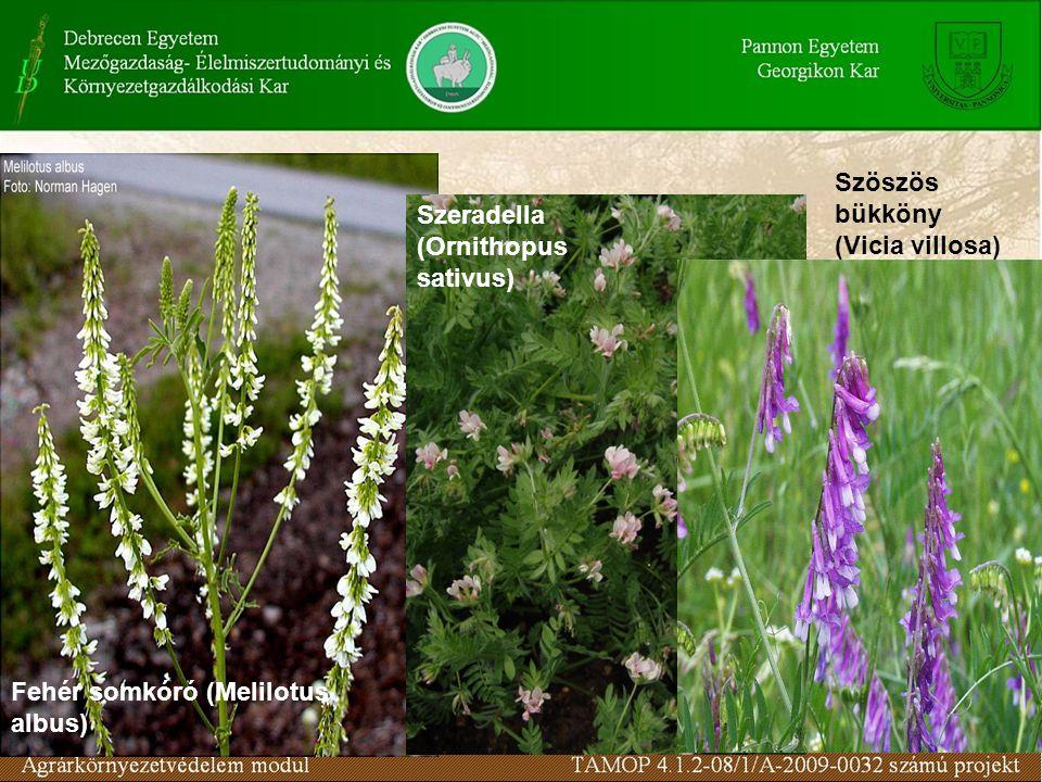 Szöszös bükköny (Vicia villosa) Fehér somkóró (Melilotus albus) Szeradella (Ornithopus sativus)