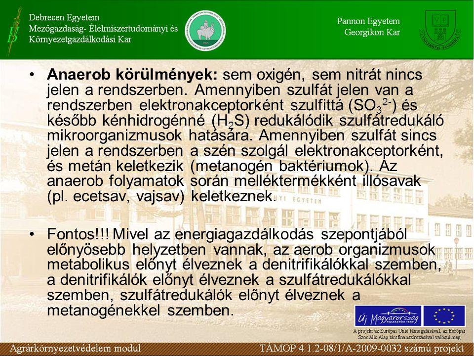 Anaerob körülmények: sem oxigén, sem nitrát nincs jelen a rendszerben. Amennyiben szulfát jelen van a rendszerben elektronakceptorként szulfittá (SO 3