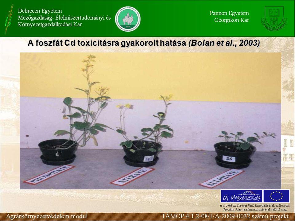 A foszfát Cd toxicitásra gyakorolt hatása (Bolan et al., 2003)