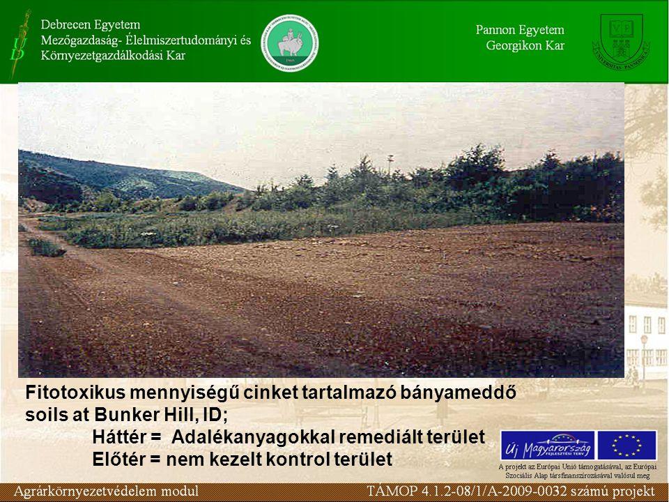 Fitotoxikus mennyiségű cinket tartalmazó bányameddő soils at Bunker Hill, ID; Háttér = Adalékanyagokkal remediált terület Előtér = nem kezelt kontrol