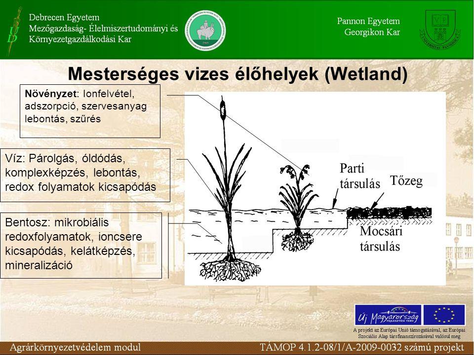 Víz: Párolgás, óldódás, komplexképzés, lebontás, redox folyamatok kicsapódás Növényzet: Ionfelvétel, adszorpció, szervesanyag lebontás, szűrés Bentosz