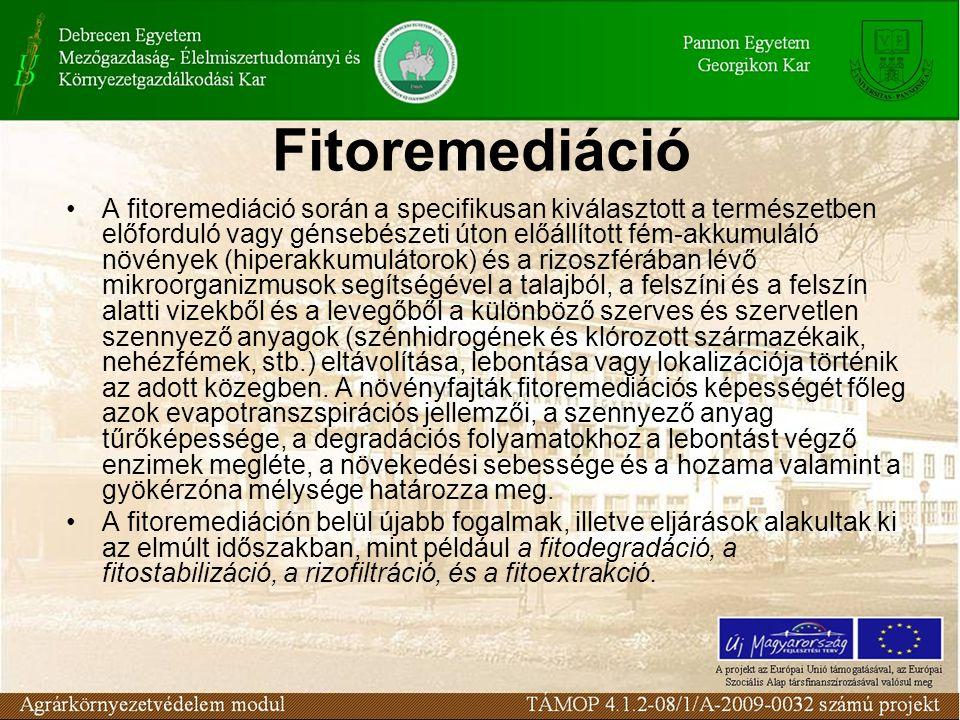 A fitoremediáció során a specifikusan kiválasztott a természetben előforduló vagy génsebészeti úton előállított fém-akkumuláló növények (hiperakkumulá