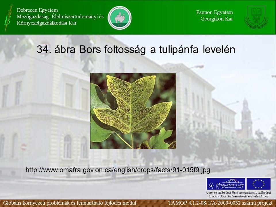 34. ábra Bors foltosság a tulipánfa levelén http://www.omafra.gov.on.ca/english/crops/facts/91-015f9.jpg