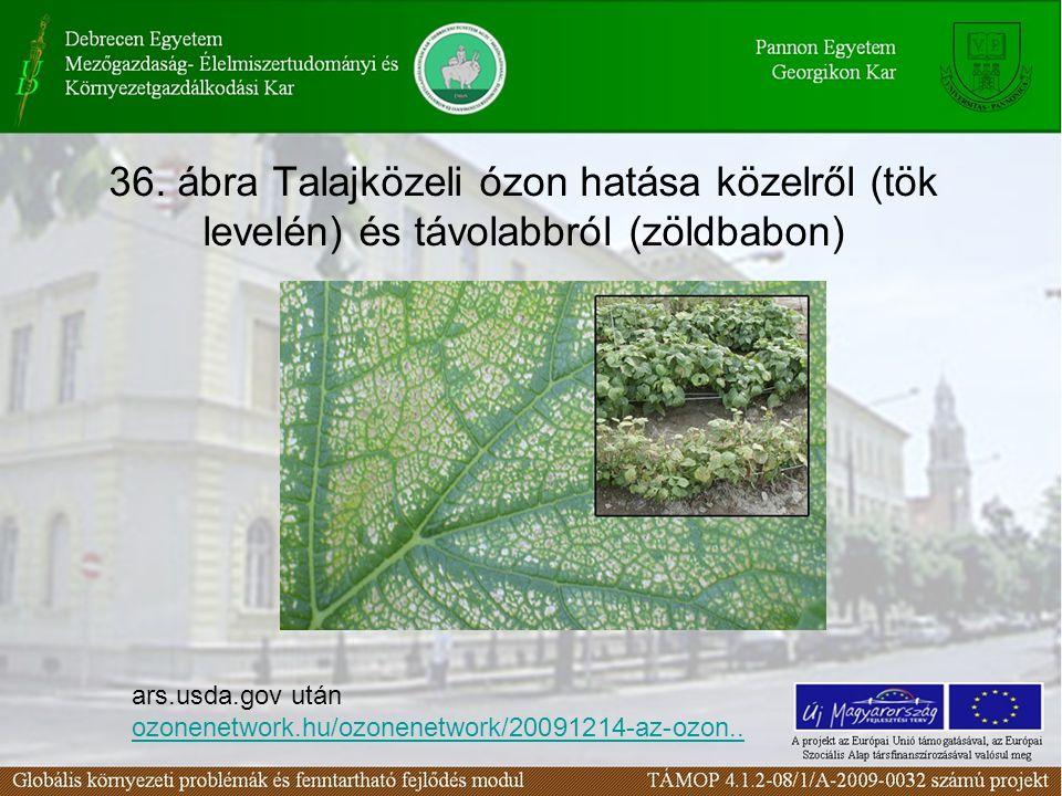 36. ábra Talajközeli ózon hatása közelről (tök levelén) és távolabbról (zöldbabon) ars.usda.gov után ozonenetwork.hu/ozonenetwork/20091214-az-ozon.. o