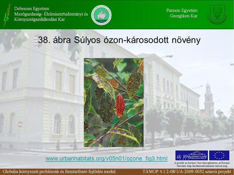 38. ábra Súlyos ózon-károsodott növény www.urbanhabitats.org/v05n01/ozone_fig3.html
