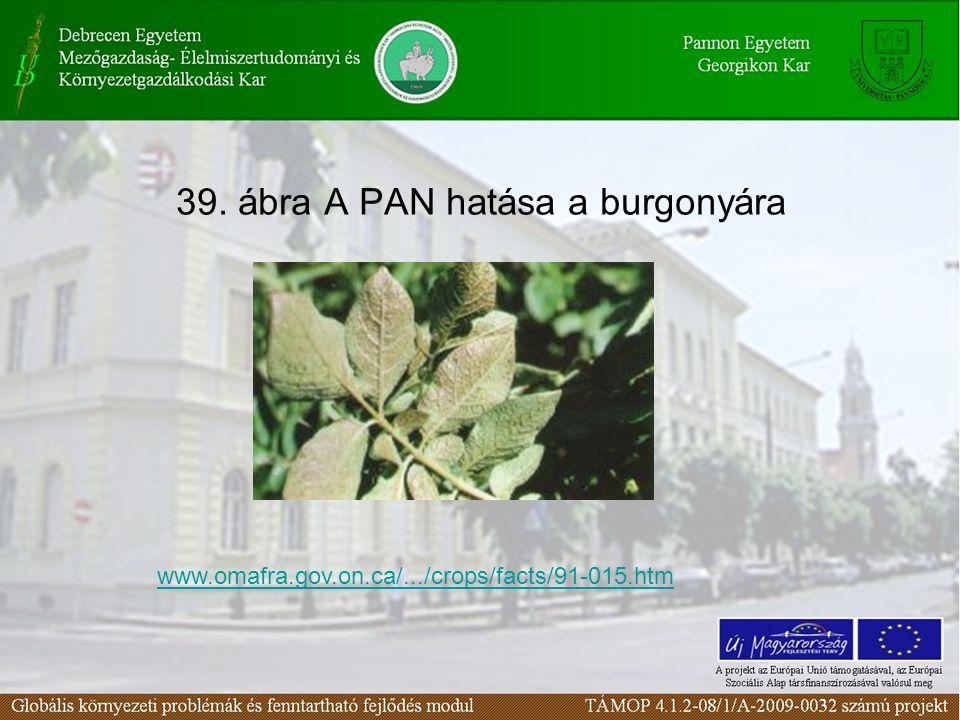 39. ábra A PAN hatása a burgonyára www.omafra.gov.on.ca/.../crops/facts/91-015.htm
