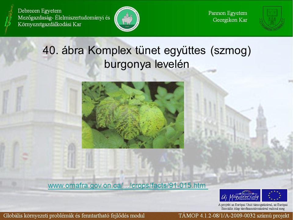 40. ábra Komplex tünet együttes (szmog) burgonya levelén www.omafra.gov.on.ca/.../crops/facts/91-015.htm