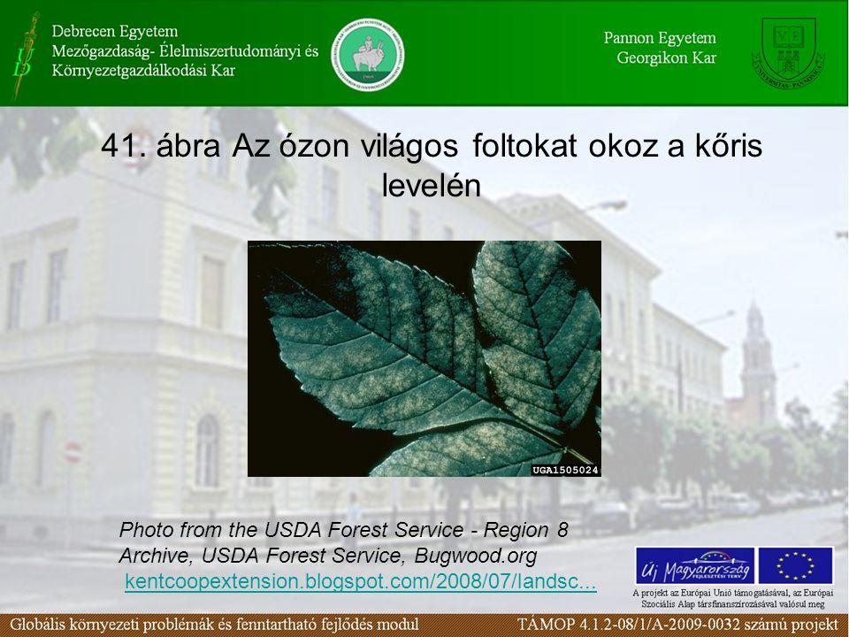 41. ábra Az ózon világos foltokat okoz a kőris levelén Photo from the USDA Forest Service - Region 8 Archive, USDA Forest Service, Bugwood.org kentcoo