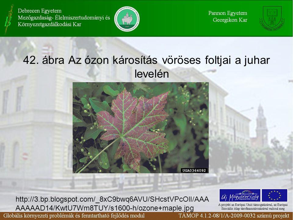 42. ábra Az ózon károsítás vöröses foltjai a juhar levelén http://3.bp.blogspot.com/_8xC9bwq6AVU/SHcstVPcOlI/AAA AAAAAD14/KwtU7Wm8TUY/s1600-h/ozone+ma