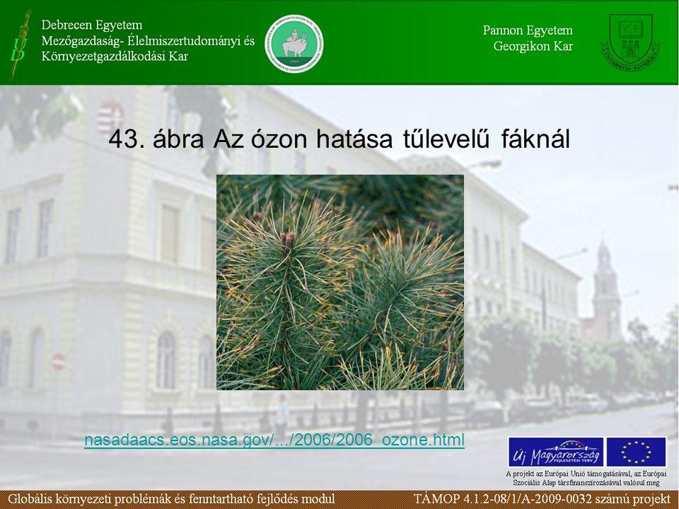 43. ábra Az ózon hatása tűlevelű fáknál nasadaacs.eos.nasa.gov/.../2006/2006_ozone.html