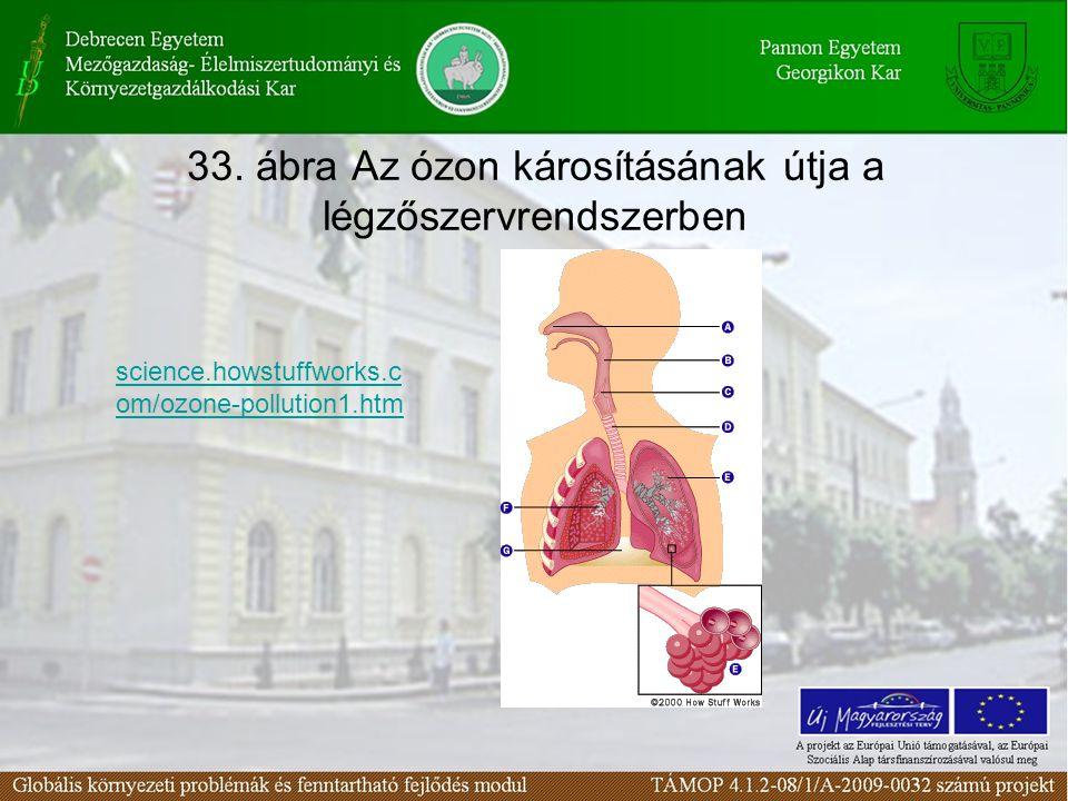 33. ábra Az ózon károsításának útja a légzőszervrendszerben science.howstuffworks.c om/ozone-pollution1.htm