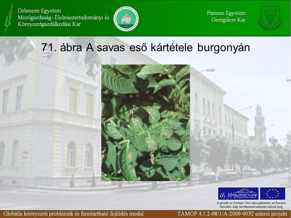 71. ábra A savas eső kártétele burgonyán