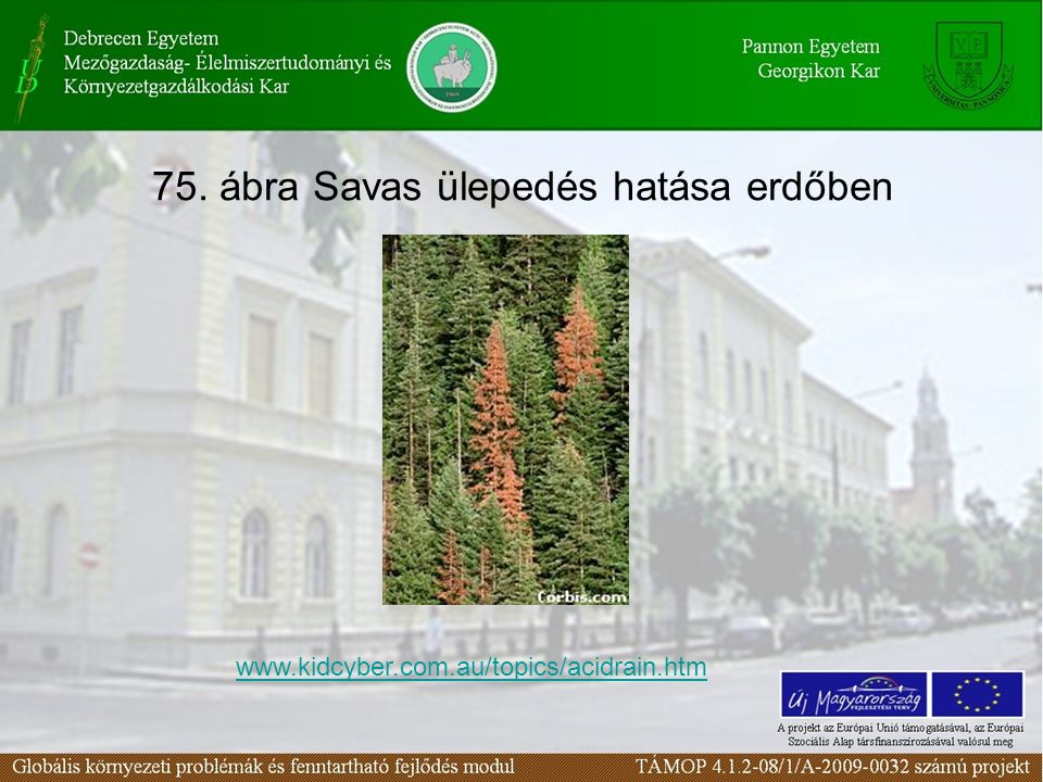 75. ábra Savas ülepedés hatása erdőben www.kidcyber.com.au/topics/acidrain.htm