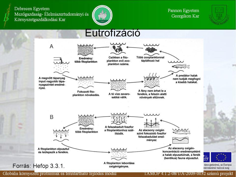 Eutrofizáció Forrás: Hefop 3.3.1.