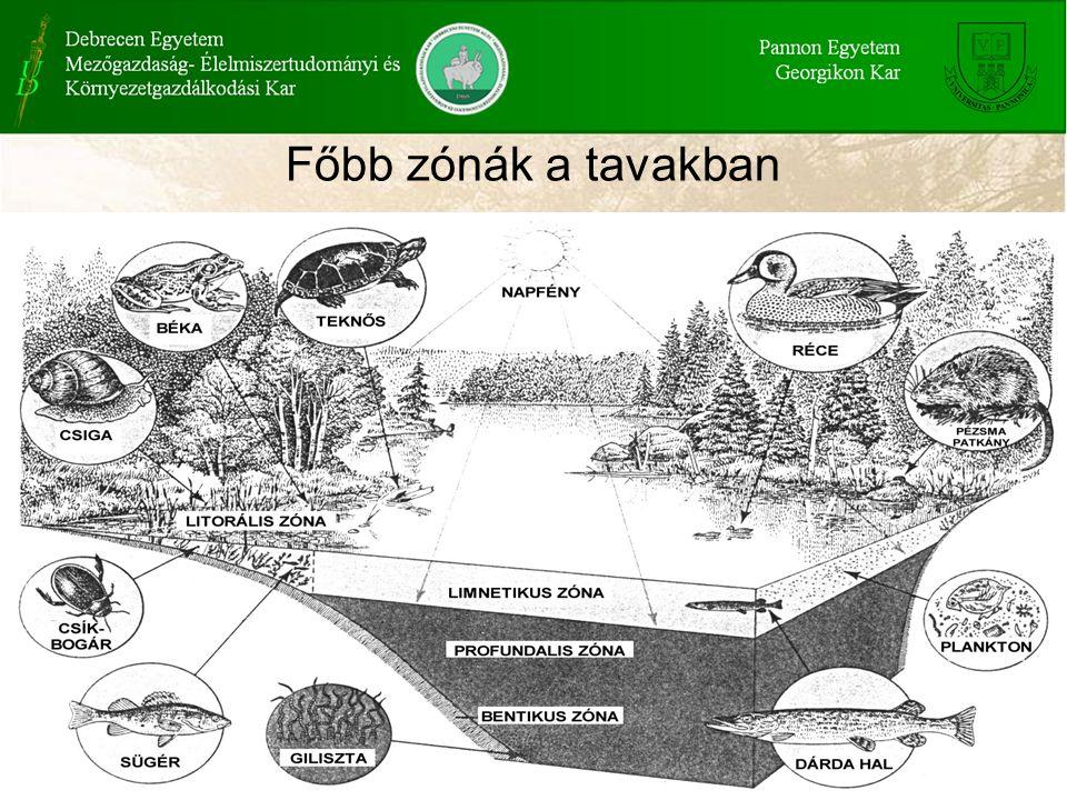Főbb zónák a tavakban
