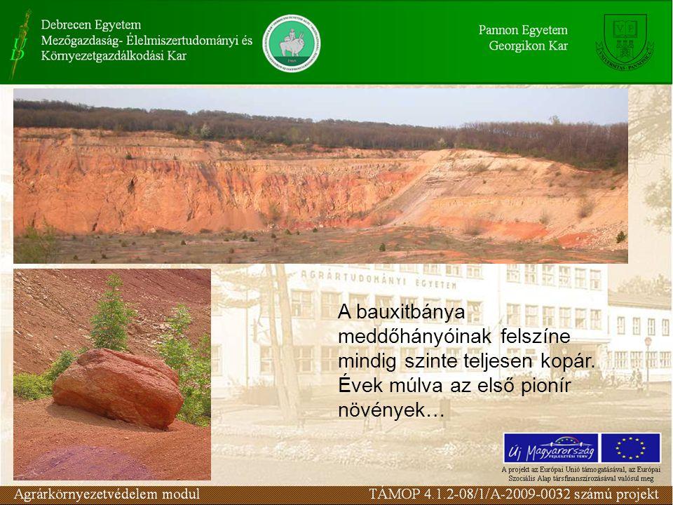 A bauxitbánya meddőhányóinak felszíne mindig szinte teljesen kopár.