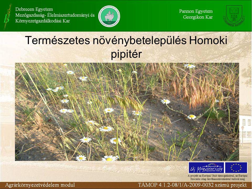 Természetes növénybetelepülés Homoki pipitér