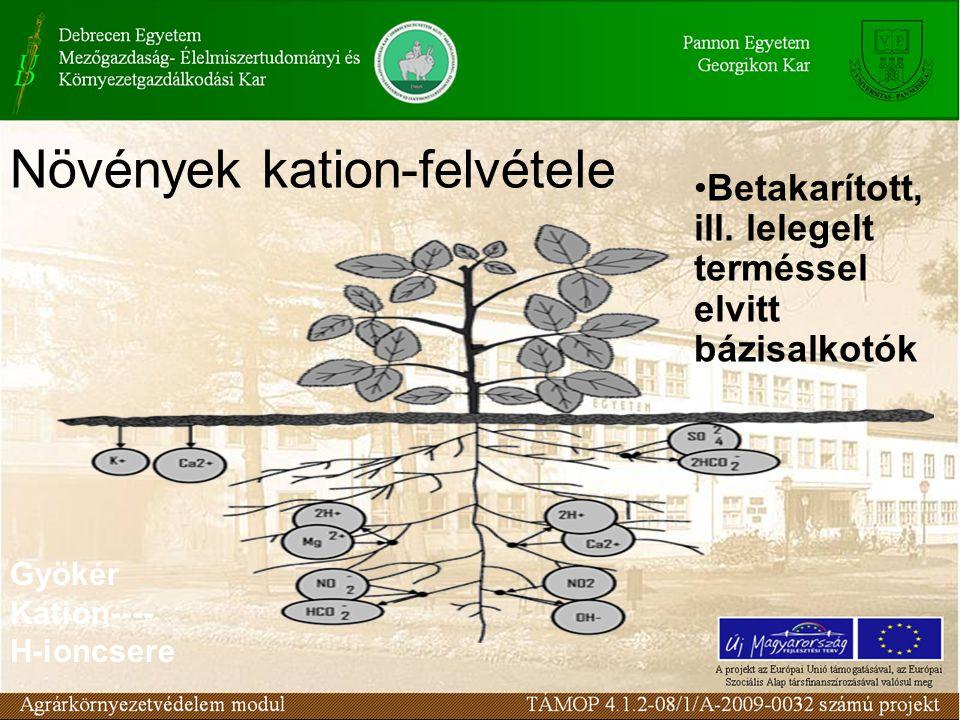 Növények kation-felvétele Betakarított, ill. lelegelt terméssel elvitt bázisalkotók Gyökér Kation---- H-ioncsere