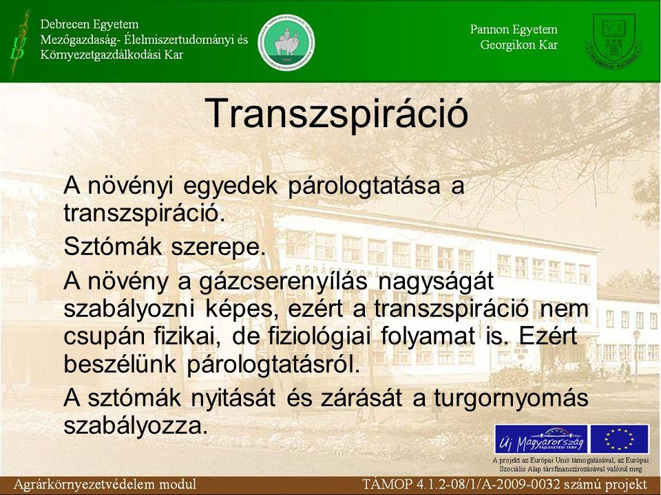 Transzspiráció A növényi egyedek párologtatása a transzspiráció. Sztómák szerepe. A növény a gázcserenyílás nagyságát szabályozni képes, ezért a trans