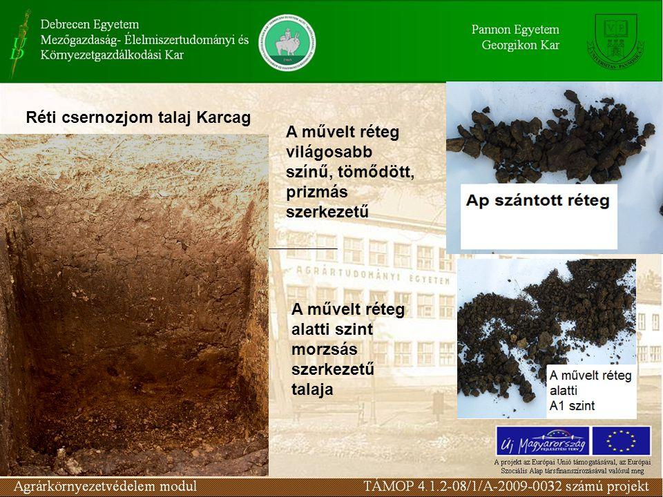 A művelt réteg világosabb színű, tömődött, prizmás szerkezetű A művelt réteg alatti szint morzsás szerkezetű talaja Réti csernozjom talaj Karcag