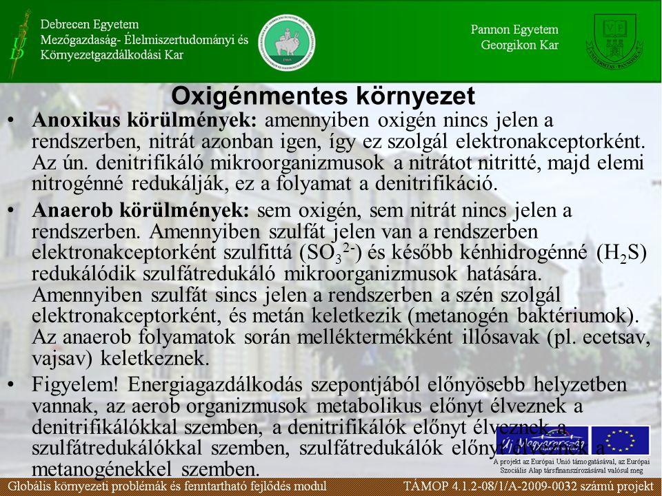 Anoxikus körülmények: amennyiben oxigén nincs jelen a rendszerben, nitrát azonban igen, így ez szolgál elektronakceptorként.
