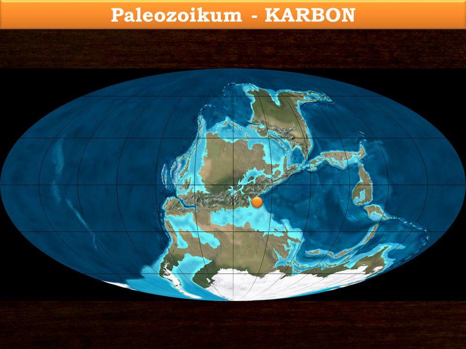 Korall, Lithostrotion sp. 1.