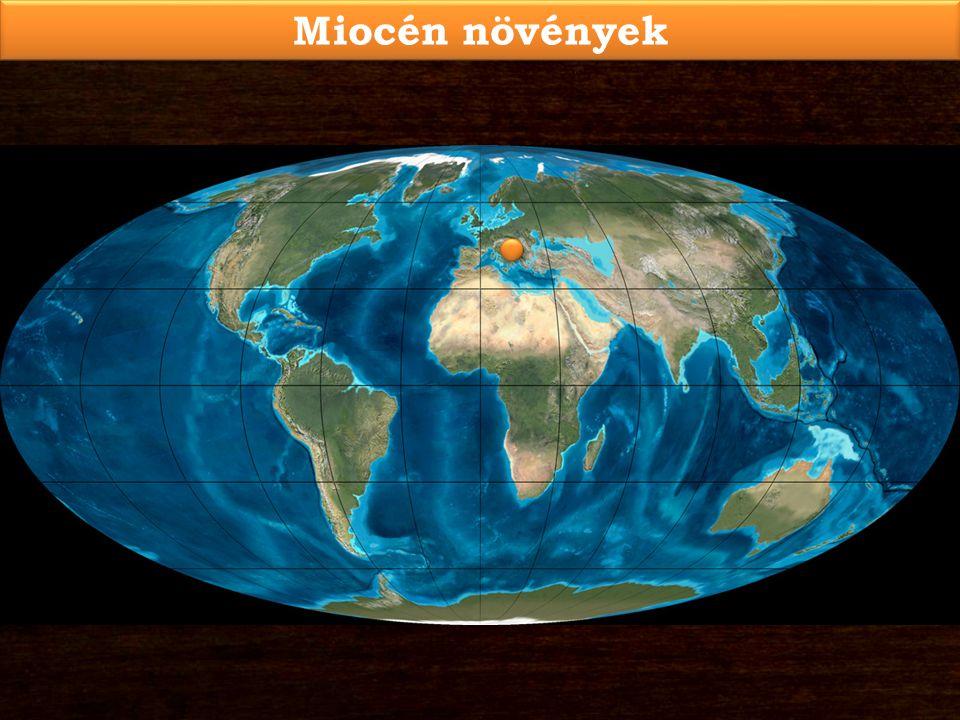 Miocén növények