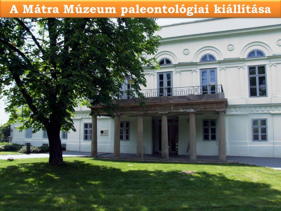 A Mátra Múzeum paleontológiai kiállítása