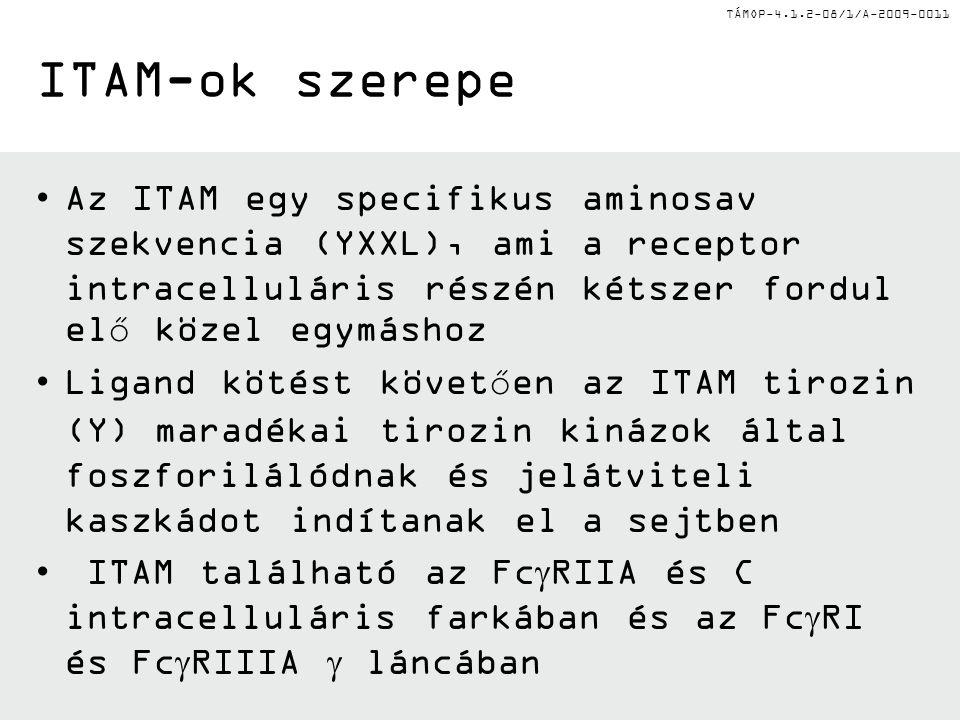 TÁMOP-4.1.2-08/1/A-2009-0011 ITAM-ok szerepe Az ITAM egy specifikus aminosav szekvencia (YXXL), ami a receptor intracelluláris részén kétszer fordul elő közel egymáshoz Ligand kötést követően az ITAM tirozin (Y) maradékai tirozin kinázok által foszforilálódnak és jelátviteli kaszkádot indítanak el a sejtben ITAM található az Fc  RIIA és C intracelluláris farkában és az Fc  RI és Fc  RIIIA  láncában