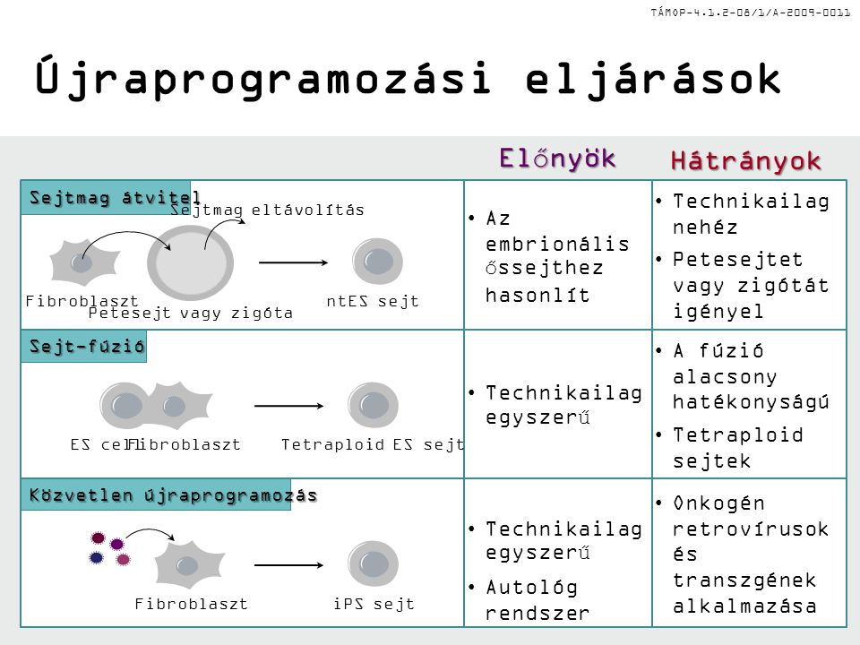 TÁMOP-4.1.2-08/1/A-2009-0011 Az őssejtek típusai Eredet alapján:Eredet alapján: –embrionális (újszülött) –születés utáni, felnőtt Normál megújulási ki
