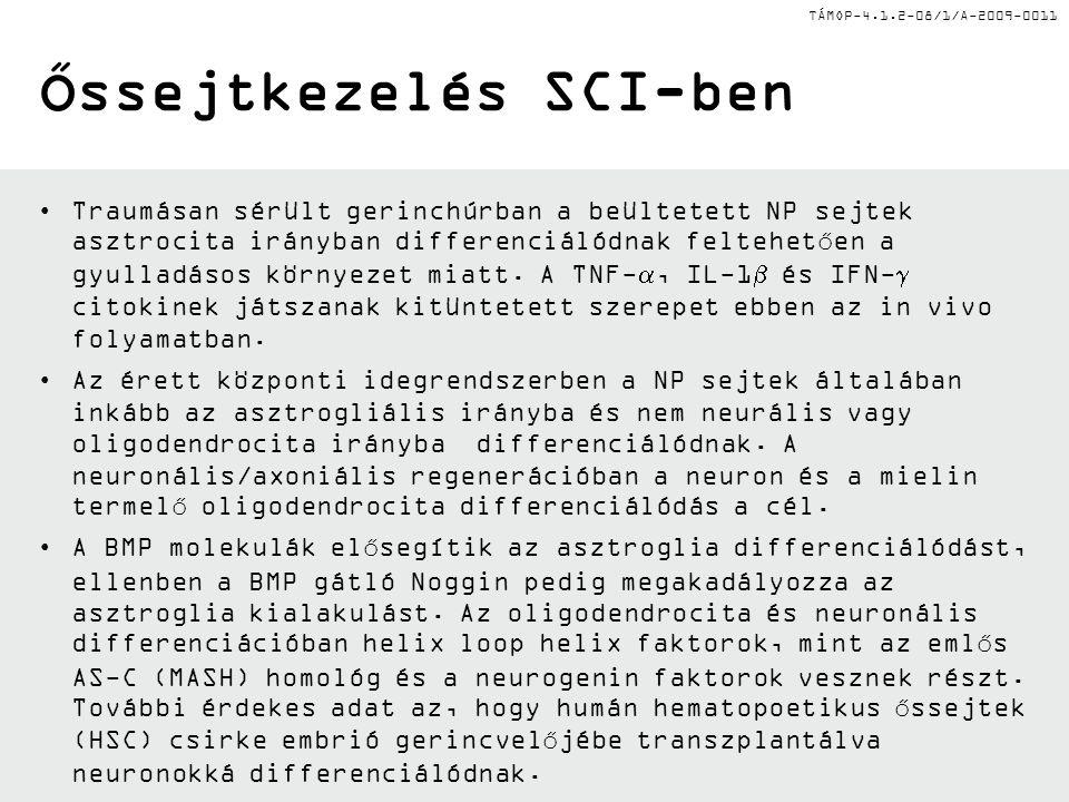 TÁMOP-4.1.2-08/1/A-2009-0011 Őssejtkezelés SCI-ben Traumásan sérült gerinchúrban a beültetett NP sejtek asztrocita irányban differenciálódnak feltehet