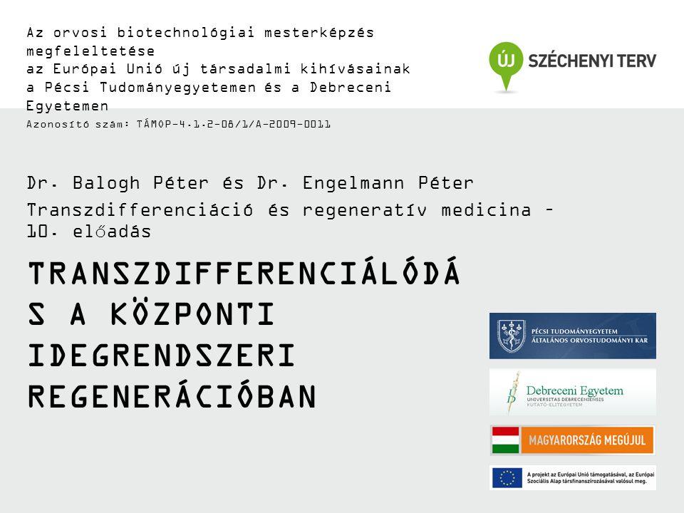 TÁMOP-4.1.2-08/1/A-2009-0011 Transzkripciós faktorok és neurális őssejtek Neuron Multipotencia 'Stemness' AsztrocitaOligodendrocita Önmegújítás Hes1, 5 Sox2 HmgA2 BMI-1 Gli2, 3 CBF-1 Hes1, 5 Sox2 HmgA2 BMI-1 Gli2, 3 CBF-1 Osztódás Hes1, 5 SoxB1 Gli1, 2,3 Id2,4 Olig2 Hes1, 5 SoxB1 Gli1, 2,3 Id2,4 Olig2 A differenciálódás gátlása Hes1,5 SoxB1 Rest Id4 HesR1, 2 Hes1,5 SoxB1 Rest Id4 HesR1, 2 Korai differenciálódás Mash1 Phox2 A Ngn1 Pax6 Sox1 Mash1 Phox2 A Ngn1 Pax6 Sox1 Terminális differenciálódás Pax2 Pax6 Ngn3 Pax2 Pax6 Ngn3 Gátlás Osztódás Önmegújítás BMI-1 HES1/5 HESR1/2 SoxB OLIG2 CBF1 HMGA2 Sox2 ID4 GLI-1 ID2 GLI-2/3