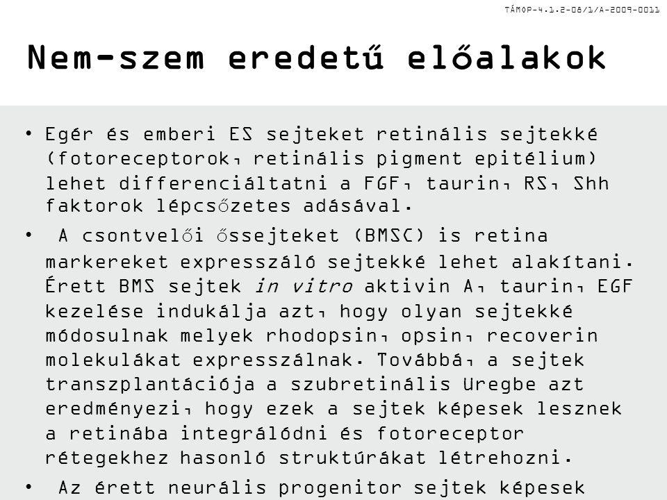 TÁMOP-4.1.2-08/1/A-2009-0011 Nem-szem eredetű előalakok Egér és emberi ES sejteket retinális sejtekké (fotoreceptorok, retinális pigment epitélium) le