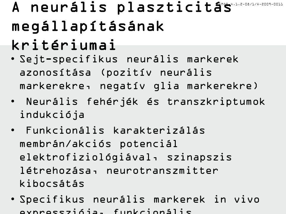 TÁMOP-4.1.2-08/1/A-2009-0011 A neurális plaszticitás megállapításának kritériumai Sejt-specifikus neurális markerek azonosítása (pozitív neurális mark