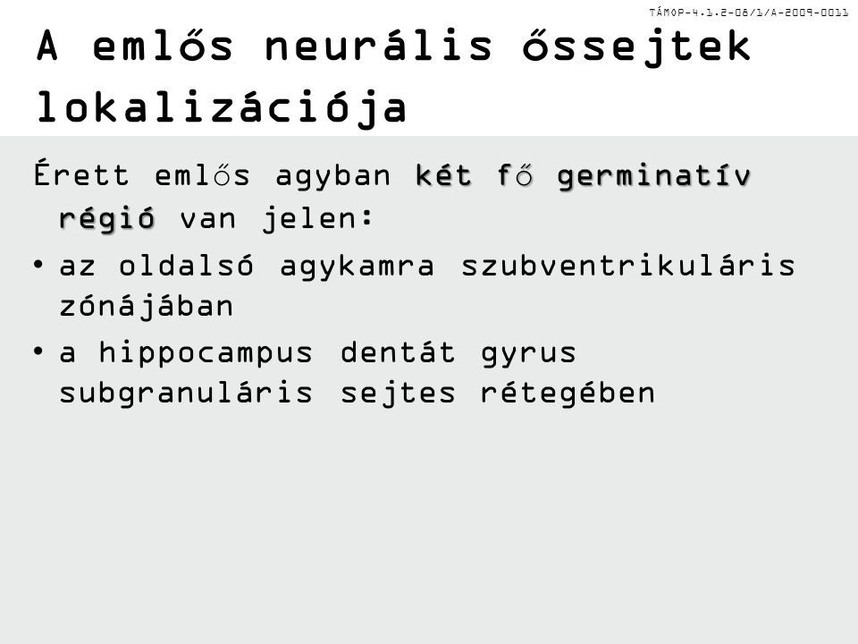 TÁMOP-4.1.2-08/1/A-2009-0011 A emlős neurális őssejtek lokalizációja két fő germinatív régió Érett emlős agyban két fő germinatív régió van jelen: az