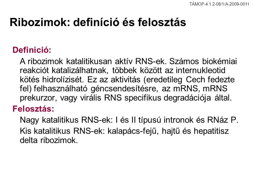 Ribozimok: definíció és felosztás Definició: A ribozimok katalitikusan aktív RNS-ek. Számos biokémiai reakciót katalizálhatnak, többek között az inter